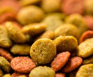 Pet Food Industry Services